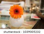 single small orange flower in... | Shutterstock . vector #1039005232