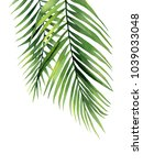 palm branches. watercolour... | Shutterstock . vector #1039033048