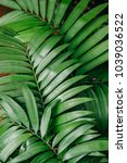green leaves of tropical plants ... | Shutterstock . vector #1039036522