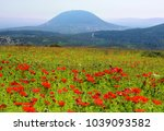 spring blooming of poppies in... | Shutterstock . vector #1039093582