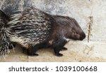 lovely sleepy porcupines.... | Shutterstock . vector #1039100668
