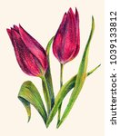 lilac tulips of color pencil.... | Shutterstock . vector #1039133812