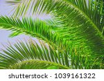 a palm against the sky.... | Shutterstock . vector #1039161322