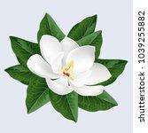 white magnolia flower.... | Shutterstock .eps vector #1039255882