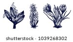 lily of the valley  crocus ... | Shutterstock .eps vector #1039268302