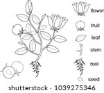 coloring page. parts of plant.... | Shutterstock .eps vector #1039275346