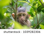 Stock photo a cute monkey lives in a natural forest of thailand 1039282306