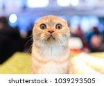 cat shock surprised kitty | Shutterstock . vector #1039293505
