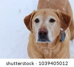 my dog playing in the snow. | Shutterstock . vector #1039405012