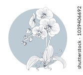 hand drawn sketch orchid flower.... | Shutterstock .eps vector #1039406692