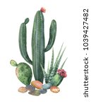 watercolor collection of cacti... | Shutterstock . vector #1039427482