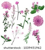 group of wild pink flowers... | Shutterstock . vector #1039451962