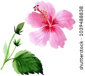 wildflower hibiscus pink flower ... | Shutterstock . vector #1039488838