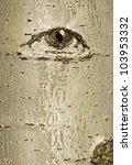 Abstract Beech Tree Bark With...