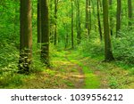 winding footpath through sunny... | Shutterstock . vector #1039556212