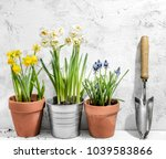 flowers in pots ready for... | Shutterstock . vector #1039583866