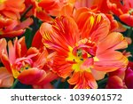 top view of vibrant red and...   Shutterstock . vector #1039601572
