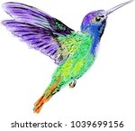 hummingbird color vector lace... | Shutterstock .eps vector #1039699156