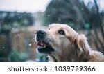Small photo of Doggo in snowfall