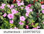 the flower garden    Shutterstock . vector #1039730722