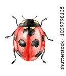 Stock photo illustration ladybug watercolor on white background isolated 1039798135