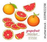 grapefruit vector set | Shutterstock .eps vector #1039822258