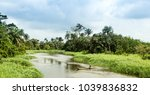nature in ivory coast | Shutterstock . vector #1039836832