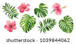 realistic tropical botanical... | Shutterstock . vector #1039844062