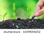 seedlings are grown from the... | Shutterstock . vector #1039854652