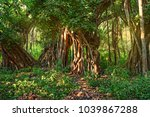 scenic view of jungle with... | Shutterstock . vector #1039867288