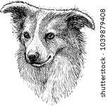 portrait sketch of a lap dog | Shutterstock .eps vector #1039879408
