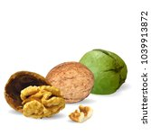fresh  nutritious  tasty walnut.... | Shutterstock .eps vector #1039913872