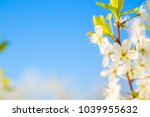 beautiful white blossoming... | Shutterstock . vector #1039955632