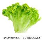 leaf fresh lettuce isolated on... | Shutterstock . vector #1040000665