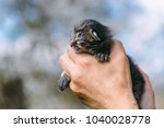 newborn kitten in hands outdors.... | Shutterstock . vector #1040028778