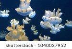 Numerous Blue Sea Jellies...