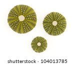 Isolated Green Sea Urchins On A ...