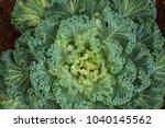 fresh vegetables in a vegetable ...   Shutterstock . vector #1040145562