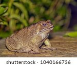 close up common toad amphibians ... | Shutterstock . vector #1040166736