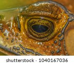 close up zoom focus the eye of... | Shutterstock . vector #1040167036
