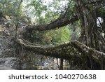 living roots bridge | Shutterstock . vector #1040270638