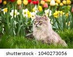 street cat in the spring garden.... | Shutterstock . vector #1040273056