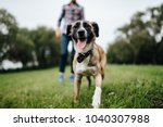 Stock photo adult stylish man playing with pet family outdoor animal lover happy dog enjoying freedom 1040307988