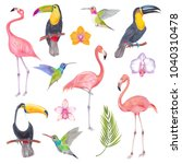 watercolor marker tropical bird ... | Shutterstock . vector #1040310478