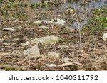 robin bird erithacus rubecula | Shutterstock . vector #1040311792