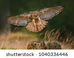 Flying Bird Of Prey  Red Taile...