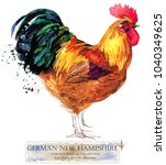german new hampshire rooster.... | Shutterstock . vector #1040349625