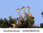 grey heron  ardea cinerea  in... | Shutterstock . vector #1040384542