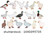 Vector  Isolated Goose  Duck ...