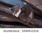 cat on street with feline... | Shutterstock . vector #1040412316